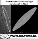 Test slide Frustulia erifuga